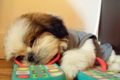 Talk about being tuckered out! ♥