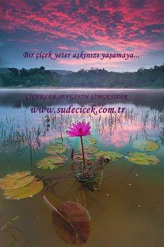 Bir çiçek yeter aşkınızı yaşamaya...  http://www.sudecicek.com.tr