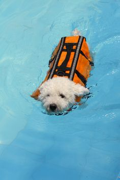 Is your pet on the mend? Here's why you should consider hydrotherapy to speed up recovery time!