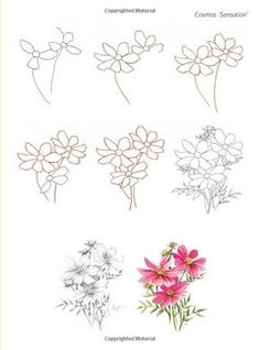 How to draw flowers: in simple steps: janet whittle: 9781844483266 Doodle Drawings, Easy Drawings, Pencil Drawings, Botanical Line Drawing, Floral Drawing, Drawing Flowers, Flower Drawing Tutorials, Art Tutorials, Watercolor Flowers