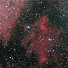 The Pelican Nebula is an H II region associated with the North America Nebula in the constellation Cygnus. The gaseous contortions of this emission nebula bear a resemblance to a pelican, giving rise to its name[1]. The Pelican Nebula is located nearby first magnitude star Deneb, and is divided from its more prominent neighbour, the North America Nebula, by a molecular cloud filled with dark dust.