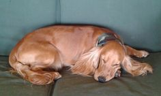 Puci - Un sonnellino  sulla dondola