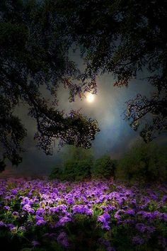 Take a walk in the moonlight                                                                                                                                                                                 More