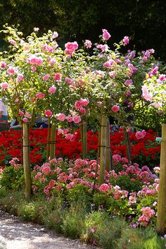 Giverny, Monets Garten, Rosen und Pelargonien (Monet's Garden, roses and geraniums)