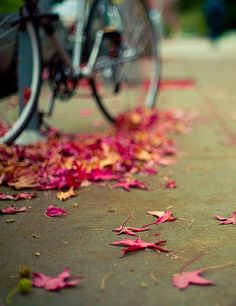 Time for an autumnal bike ride...