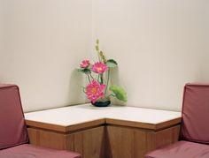 "Dana STIRLING, ""Plastic Pink"" (2013)."