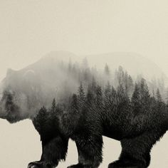 Bear In The Mist • animal silhouette with its habitat inside