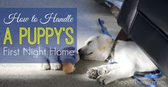 How do you handle your puppy's first night home?