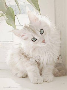 White Kitty that is soooo cute, mama will be with you soon :)