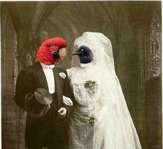 Vintage Animal 5x7 Print - Anthropomorphic - Animal Photo - Funny Animal - Altered Photo - Arnold and Maria - Collage Art, by AnimalFancy at etsy