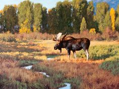 The Jackson Hole Art Auction is recognized as one of the premier art and auction events in the country, specializing in renowned past masters and contemporary western, wildlife, sporting, figurative and landscape art. Buffalo Pictures, Moose Pictures, Art Pictures, Wildlife Paintings, Wildlife Art, Animal Paintings, Cool Landscapes, Landscape Paintings, Hunting Art