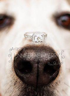 Newmarket engagement ring on dog's nose - www.jnphotography.ca @Jennifer Newberry