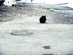 Sleepless Winter - photo taken by me #art #photo #minimal #nature