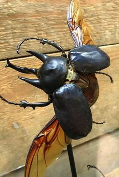 Ancient bell with two big rhinoceros beetles. - 090 Taxidermy, Hunting trophies, antlers etc. - De Jong Interieur