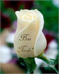 Flores e frases: BOA TARDE... Boa tarde meu bem querer.