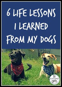 Sometimes our dogs can teach us more than we think! Kristen discusses some life lessons she learned from her dog.