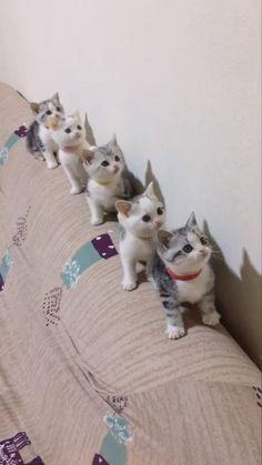 The small team - kittens Baby Animals Super Cute, Cute Baby Cats, Cute Little Animals, Cute Cats And Kittens, Cute Funny Animals, Cute Dogs, Funny Cats, Small Kittens, Adorable Kittens
