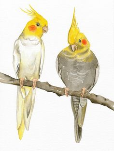Bird Art Print Limited Edition 8x11 COCKATIELS by lorisworld - something like one of these for a bicep tattoo?