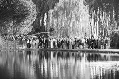 #wineryroadforest  #forestweddings  #capetownweddings  #destinationwedding Forest Wedding Venue, Wedding Venues, Wedding Photos, Mountain View, Backdrops, Destination Wedding, Wedding Reception Venues, Marriage Pictures, Wedding Places