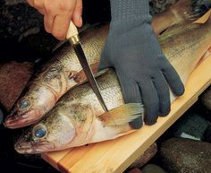 Seven Secrets to Beautiful Fish Fillets | Rapala Fishing Blog