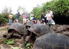 #ecuador #turismo Los tres lugares de Ecuador que recomienda The New York Times