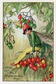 The NIGHTSHADE BERRY Fairy ~ Cicely Mary Barker ~