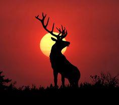 animals,animal,elk,sunset,dusk,silhouette,