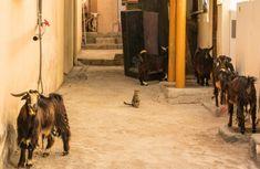 Oman, fabuleux pays des 1001 nuits - Itinera-magica.com Travel