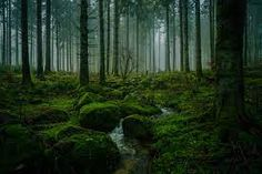 forest - Google Search Attractions In Germany, Different Types Of Meditation, Black Forest Germany, Museum Island, Sound Of Rain, Fairytale Castle, Walking Tour, Worlds Largest, Northern Lights