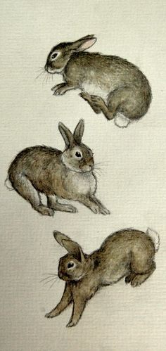 When rabbits are happy, then do some amazing hops and jumps know as binking/binky/binkies. This is a sign of a very happy bunny. Art And Illustration, Rabbit Illustration, Rabbit Drawing, Rabbit Art, Beatrix Potter, Child Draw, Lapin Art, Year Of The Rabbit, Bunny Art