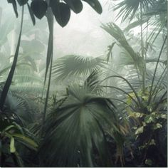 jungle.inspiration