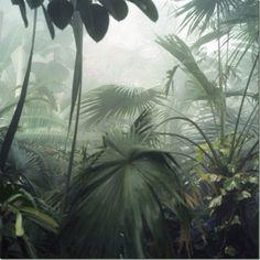 jungle.inspiration