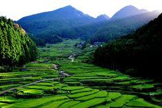 日本の原風景とも言える景観を形成してきた棚田。 - 写真ブログ・ずバッと「今日の1枚」。
