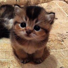 Love Cute Cats