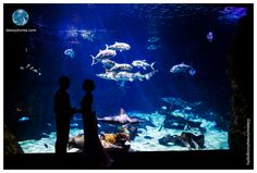 Virginia Aquarium Wedding  | Shark Tank Portrait | Wedding Silhouette| Daissy Torres Photography
