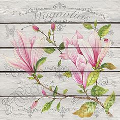 Pink Magnolias-JP3923 by Jean Plout