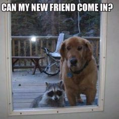 lol #funny #fun #dogs #pets #animals #lol #haha #smile #laugh #laughing #fashionmagenet
