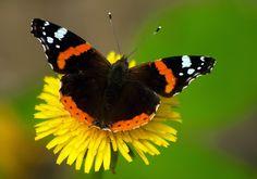 Butterflies, Birds, Colour, Wallpaper, Nature, Animals, Beautiful, Cute Pets, Papillons