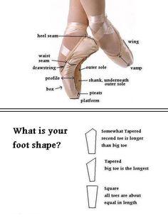 Pointe shoe anatomy/foot shape