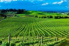 Domain Parked With VentraIP Australia Napier New Zealand, Travel Agency, Vineyard, Around The Worlds, Outdoor, Inspiration, Google Search, Outdoors, Biblical Inspiration