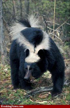 stinky bear
