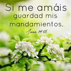Si me amáis guardad mis mandamientos. Juan 14:15