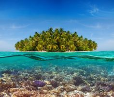 Coral reef and the Island by Novikov Sergey, via 500px