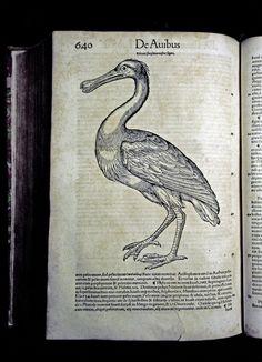"""#GESSNER (Conrad) Historiae animalium. Liber III - anno MDLIIII (1554) Collezione privata """"Frilli"""" Forte dei Marmi. Prima edizione.  #frillilibrary"""
