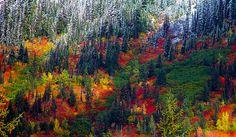 Autumn meets winter. (Photo: Jonathan Cooper)
