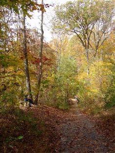 Lake Accotink Trail