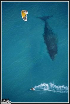 OMG this makes me want to cry!!! Ive always been terrified of whales because they are SO FREAKING HUGE!!!!!