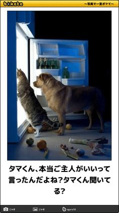 Funny Cats Related posts:Cute funny cats and kittens. Funny laws about catsCute, funny cats. Did you know that cats.Сute funny cats, Unusual facts about cats: emotions, smelling Animals And Pets, Funny Animals, Cute Animals, Fauna, Funny Animal Pictures, Pet Health, Dog Care, I Love Dogs, Neko