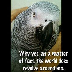 So like my gray!!
