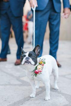 Cute wedding idea: Pets as ring bearers